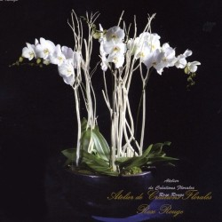 Composition of Phalaenopsis