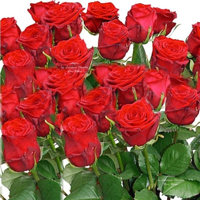Bouquet de roses rouges for Livrer des roses